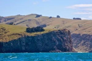 cliff in nz
