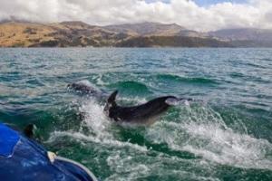 dolphin 2 nz